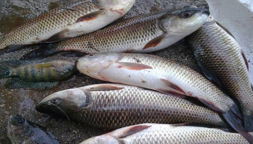 पश्चिम बंगाल और आन्ध्र प्रदेश से आने वाली मछलियों पर बिहार में लगी रोक! 20