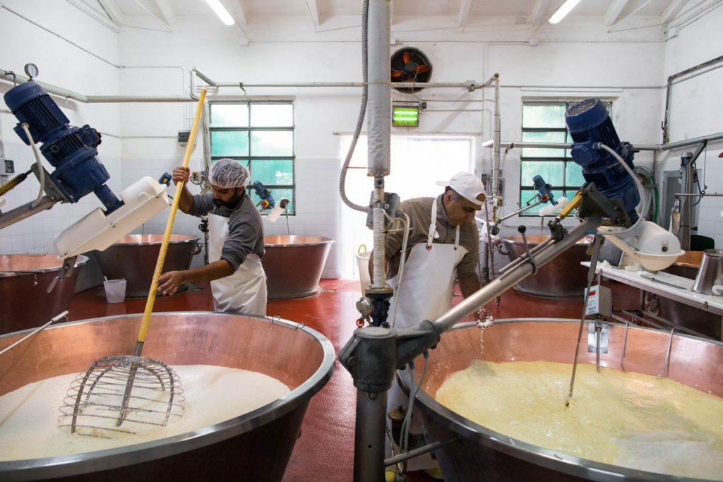 इटली के पारंपरिक पनीर उद्योग को बचाने वाले भारतीय 29
