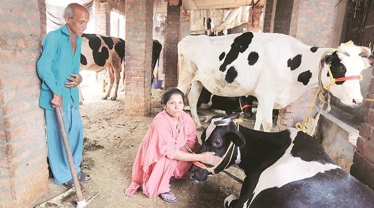 दिल्ली सरकार की नीति : पशु आश्रय और वृद्धाश्रम एक साथ, जहां गाय और वरिष्ठ नागरिक एक-दूसरे ख्याल रखेंगे 7