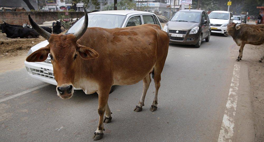 1. 25 लाख रुपए के गाय के गोबर की हुई चोरी, कर्नाटक पुलिस कर रही है चोरों की तलाश 1