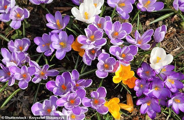 इस साल फूलों की खुशबू उम्मीद से कहीं ज्यादा मजबूत : विशेषज्ञ 26