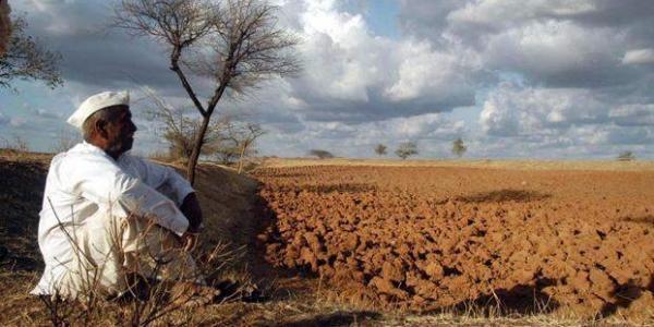 आंध्र, तेलंगाना में आम के किसान घाटे में