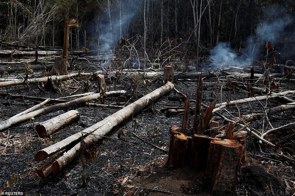 अमेज़न के घने जंगल : दो हफ्ते से जल रहा है पृथ्वी का फेफड़ा,  जो दुनिया को देती है 20% ऑक्सीज़न 2