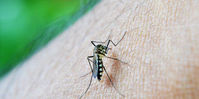 हैदराबाद में डेंगू बुख़ार से लड़की की मौत 9