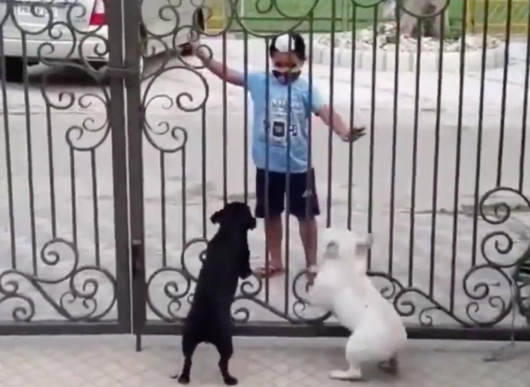देखिए: कुत्ते के सामने छोटे से बच्चे का भांगड़ा डांस! 10