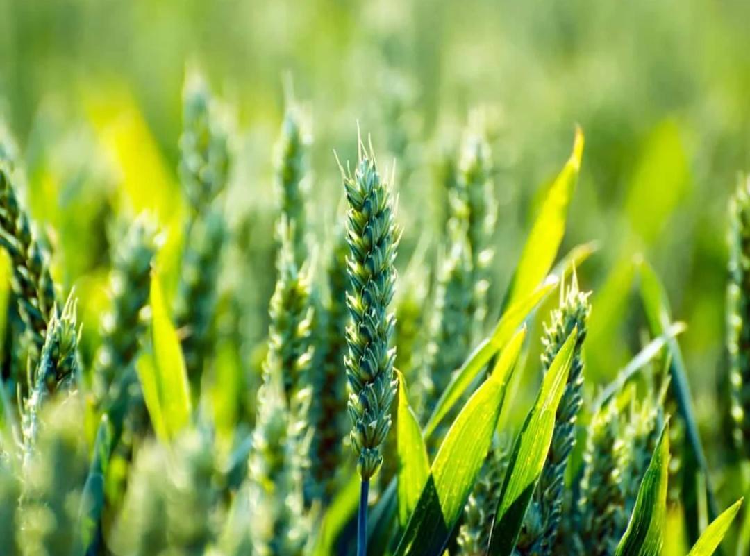 1 लाख एकड़ कृषि भूमि बिना मालिकों के विवरण के धरणी पोर्टल पर अपलोड की गई 3