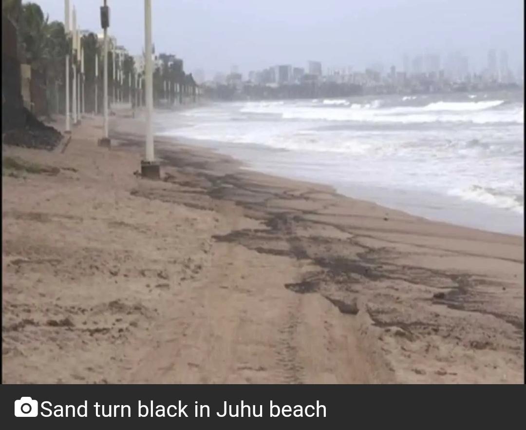 मुंबई: तेल रिसाव के बाद जुहू बीच पर रेत काली हुई! 8