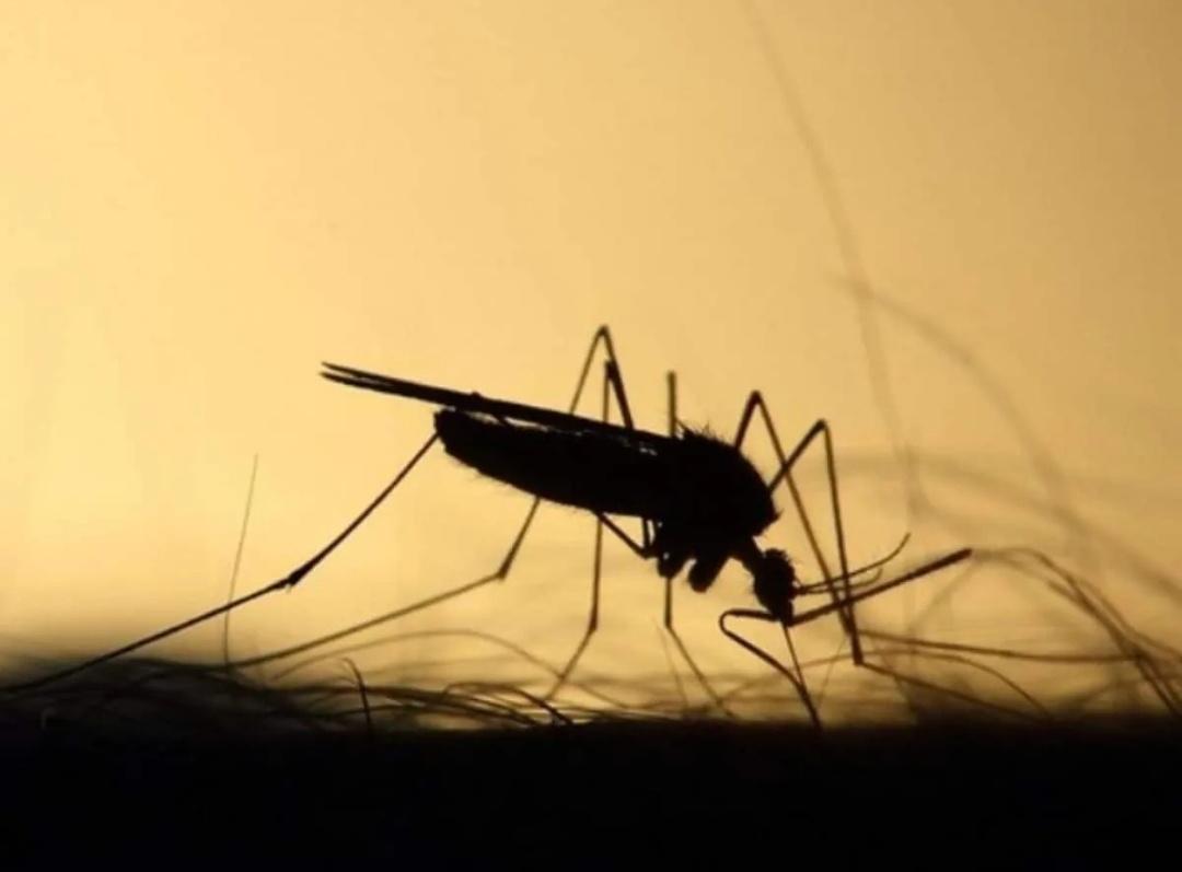 पटना में 72 घंटे में डेंगू के 16 मामले सामने आए 4