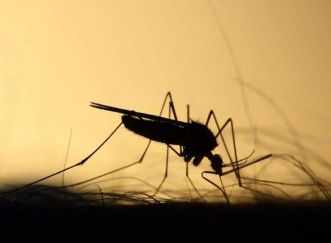 हैदराबाद: डेंगू बुखार के 522 मामलों के साथ, सरकार ने प्रकोप से निपटने के लिए टीम तैयार की 12